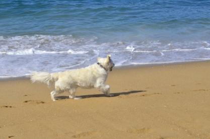 Beach Time (9)