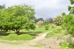 Morning at the Botanic Garden (10)
