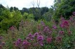 Morning at the Botanic Garden (11)