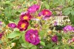 Morning at the Botanic Garden (12)
