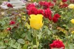 Morning at the Botanic Garden (13)