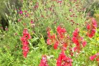 Morning at the Botanic Garden (4)
