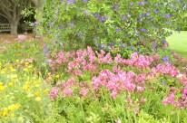 Morning at the Botanic Garden (6)