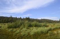 Day Trip to Big Bear Lake (16)