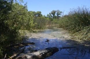 Two Mile Walk at El Dorado Nature Center (10)