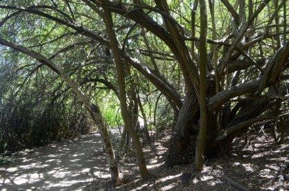 Two Mile Walk at El Dorado Nature Center (11)