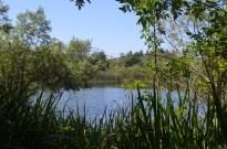 Two Mile Walk at El Dorado Nature Center (13)