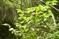Two Mile Walk at El Dorado Nature Center (8)
