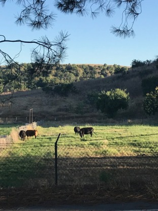 Visit to Cal Poly Farm Store (13)