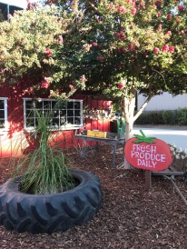 Visit to Cal Poly Farm Store (6)