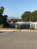Visit to Cal Poly Farm Store (8)
