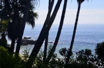 Beautiful Laguna Beach (3)