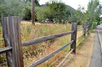 Oak Glen After The El Dorado Fire, part 2 (2)