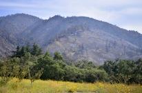 Oak Glen After The El Dorado Fire, part 2 (7)