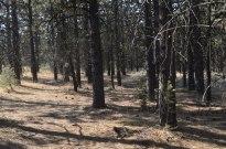 Picnic Near Mount Pinos (16)