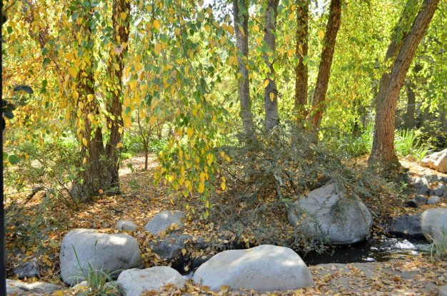 Morning at Descanso Gardens, 1 (15)