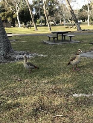 A Walk at Yorba Regional Park (13)