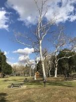 A Walk at Yorba Regional Park (4)