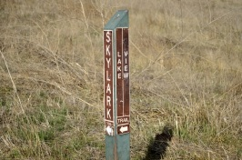 Read While You Walk (12)