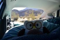 My travel companion, Hopsy.