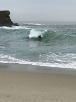 Surf's Up at Aliso Beach (1)