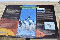 Sights From Kansas - Cheyenne Bottoms (7)