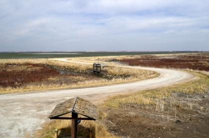 Sights From Kansas - Cheyenne Bottoms (9)