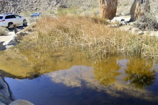 Pond with the pupfish