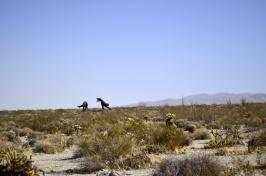 Terror in the Desert (4)