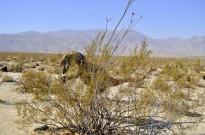 Terror in the Desert (7)